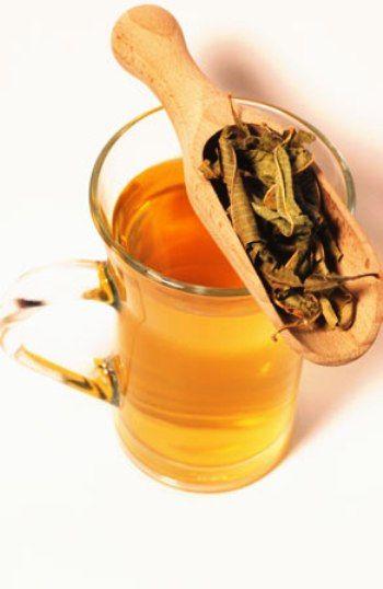 گياه دارويي به ليمو Lippia citriodora